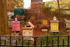 painted bee hives | Honey Flows From Battery Park's Expanded Beehives - Financial District ...