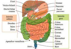 Study Motivation, Metabolism, Health Fitness, Segment, Education, Biology, Anatomy, Motivation To Study, Health And Fitness
