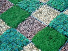 Checkerboard Groundcover
