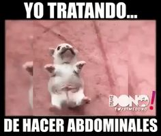 X xd x d x d x d x xx d d. Xd xd xdxx d. X d xd x d x d xd x ex d x d x. XD x d x d x. D xd xd xd Funny Dogs, Funny Animals, Cute Animals, Funny Images, Funny Pictures, Funny Spanish Memes, New Memes, Kawaii, Funny Cute