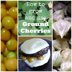 Ground Cherries are little orange fruit inside an attractive paper wrapper. How-to grow, store and use Ground Cherries in yummy recipes.
