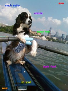 Dock dog! I can so see Donica doing this with Tigger