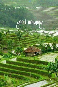 Good Morning Animals, Good Morning Nature Images, Good Morning Flowers Pictures, Good Morning Friends Images, Good Morning Dear Friend, Good Morning Beautiful Pictures, Good Morning Picture, Good Morning Love, Morning Pictures