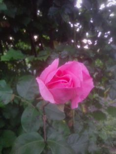 In dir die Erde Flowers, Plants, Earth, Royal Icing Flowers, Flower, Florals, Plant, Bloemen, Planting