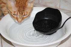 Fácil e barato: fonte de água para gatos feita em casa