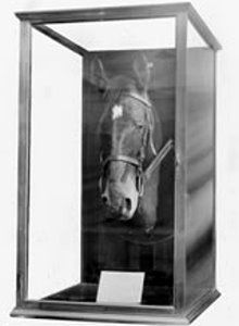 Sandy, the favourite of three chargers who belonged to Major-General William Throsby Bridges, and the only horse to return to Australian shores post WWI. Anzac Day Australia, Wooden Crosses, Major General, Lest We Forget, Remembrance Day, History Photos, Historical Photos, War, Horses