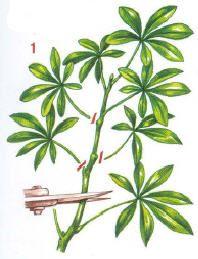 Plants, Deco, Gardens, Plant Cuttings, Floral Arrangements, Flowers, Kitchens, Decor, Plant