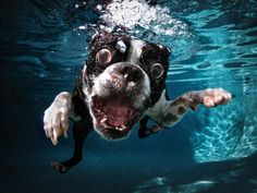 from the book Underwater Dogs by Seth Casteel
