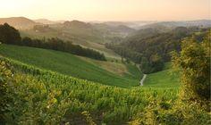 """Die Einzellage """"Hochsulz"""" des Weinguts SKOFF ORIGINAL Vineyard, The Originals, Outdoor, Outdoors, Vine Yard, Vineyard Vines, Outdoor Games, The Great Outdoors"""