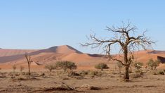 Surreale Dünen-Landschaft, die je nach Tageszeit ihre Farben ändert -rosa, ocker oder orange - einzige Abwechslung sind knorrige Bäume. Namibia, Mountains, Orange, Nature, Travel, Pink, Zimbabwe, Adventure Tours, Natural Wonders