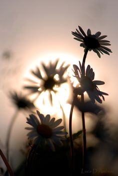 misty flowers by Luca D'Ambros Girls With Flowers, Pastel Flowers, Simple Flowers, Types Of Flowers, Beautiful Flowers, Sunset Silhouette, Girl Silhouette, Beautiful Sunset, Beautiful World