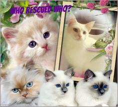 """this photo is for the Facebook group is for Cat Lovers! go to Facbook and """"Cat Lovers, Who Rescued Who?"""""""