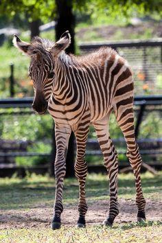Babyboom pa gang pa zoo