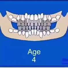 Teeth eruption dates. Tooth eruption explained with visuals. Learn when your deciduous (baby or milk Dental Assistant Study, Dental Hygiene Student, Dental Procedures, Dental World, Dental Life, Dental Health, Dental Jokes, Dental Facts, Dental Surgery
