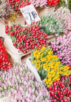 The time for tulips | WishWishWish