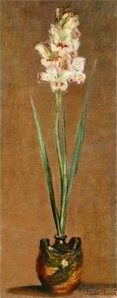 Gladiolus, 1881