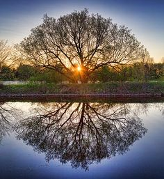 Tree reflected as in a mirror at sunrise - Albero riflesso come in uno specchio sull' acqua