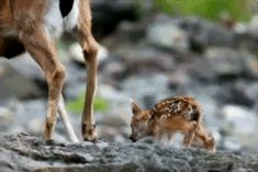 Real life Bambi. | 19 Animal GIFs That Will Make You Appreciate The Beauty Of Nature
