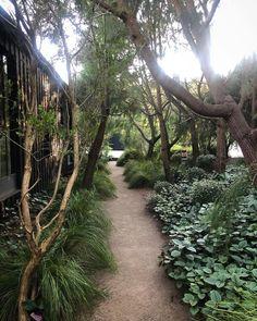 Seaside Garden, Coastal Gardens, Beach Gardens, Side Gardens, Landscape Plans, Landscape Design, Garden Design, Australian Native Garden, Minimalist Landscape