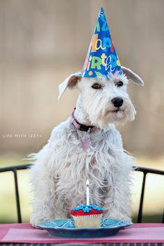 Life with Izzy the miniature schnauzer dog.  Izzy turns 6 this month.  Happy Birthday Izzy.