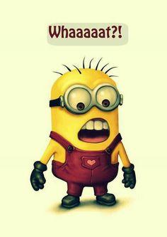 Minion says whaaaaat? Love my minions Minions Images, Cute Minions, Minion Pictures, Minions Despicable Me, Minions Quotes, Funny Pictures, Funny Minion, Minion Humor, Minion Whaaat