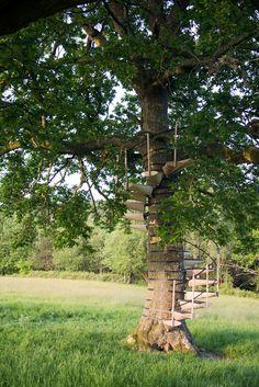 Designers desenvolveram a CanopyStair, um sistema modular de degraus que pode ser montado formando uma escada em espiral ao redor de um tronco de árvore.