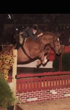 Osczar & Dawn Fogel at the National Horse Show in 2001. Osczar is one of two horses to be inducted into the National Show Hunter Hall of Fame in 2016