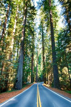 """I am blessed to live in Northern California, where only a few miles away I can enjoy the majesty of these ancient forests. These @ """"The Avenue Of The Giants"""" lie on the Pacific West Coast. And it is HOME  to the WORLDS TALLEST TREES."""