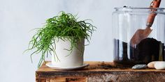 How to Bring a Dying House Plant Back from the Brink on Food52