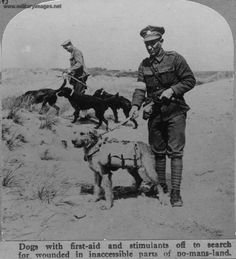 Retrievers were used to fetch and carry medical supplies on the battlefields of WWI.