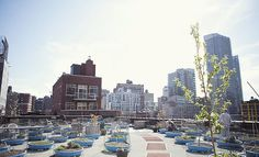 Hells Kitchen Farm Project | Rooftop Farm Clam Shell Pools as garden beds