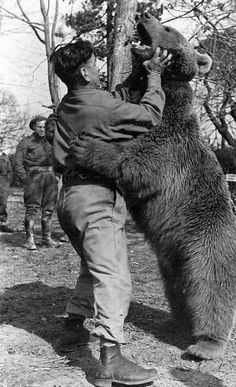 'Wojtek (1942–1963) was a Syrian brown bear cub found in Iran and adopted by soldiers of the 22nd Artillery Supply Company of the Polish II Corps. He enjoyed wrestling and was taught to salute when greeted. With the company he moved to Iraq and then through Syria, Palestine and Egypt.    'He was officially drafted into the Polish Army as a private. During the Battle of Monte Cassino, Wojtek helped move ammunition.    'Following demobilization on November 15, 1947, Wojtek was given to the…