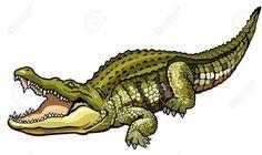crocodile: nile crocodile,crocodylus niloticus,wild african animal,side view picture isolated