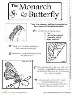math worksheet : 1000 images about butterfly education on pinterest  life cycles  : Butterfly Math Worksheets