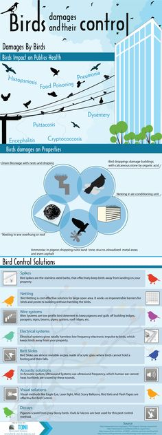 Birds damages and their Control solutions  http://www.birdcontrolsolutions.net/ Birds plays an important role in environment monitoring. Every species has its own significance. But on the contrary side there are some damages also exist from birds to human health & building. Bird dropping are acidic in nature & harmful for both (human health & buildings). In this infographic, we are showing damages by birds & their solutions for bird control.