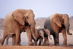 Elephants in Etosha National Park, Namibia - photo from news.com.au/travel