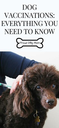 Dog Vaccinations: Everything You Need To Know | Dog Health Tips |