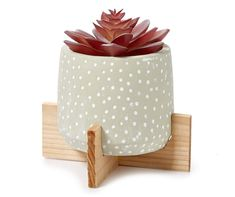 Succulent in Green Raised Cement Pot - Big Lots Big Lots Store, Cement Pots, Artificial Succulents, Garden Ornaments, Dream Decor, Your Space, Greenery, Texture, Pattern