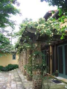 climbing heritage roses on an entry pergola with rustic stone columns