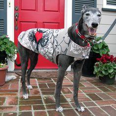 Greyhound Dog Coat, Gray, Black, & Red Heart Print Fleece with Red Fleece Lining