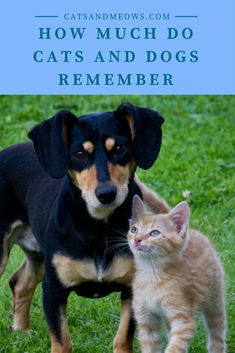 Love your furry friend but want to tread lightly on the earth? Here are the best pet care tips for eco friendly pet owners. Pet care tips for green living! Pet Shop, Top Dog Breeds, Pet Care Tips, Pet Health, Mental Health, Cat Food, Fleas, Dog Training, Training Collar