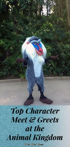 Favorite Character Meet & Greets at the Animal Kingdom, Walt Disney World, WDW Disney tips, Florida Travel