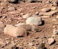 Roedor fotografado em Marte?
