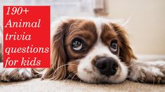 Animal trivia for kids and for grade 2 students Toxic Foods For Dogs, Canis, Dog Urine, Easiest Dogs To Train, Poodle Mix, Dog Behavior, Dog Training Tips, Cocker Spaniel, Dog Breeds