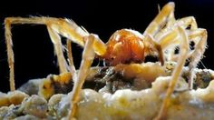 What bizarre organisms are living in Romania's poison cave? | Amazing Science…