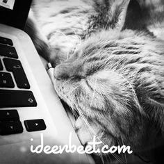 #Powercatnapping – ideenbeet.com | #ideenbeet #ideenbeet #Selbstmanagement #Büromanagement #Worklifebalance