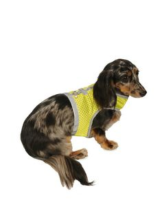 Athletic Vest Harness by My Canine Kids at Gilt