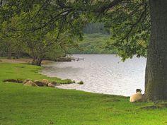 Ministerio Cristiano Genesaret: Cómo árbol plantado junto a las ...