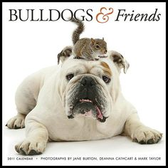 bulldogs and friends