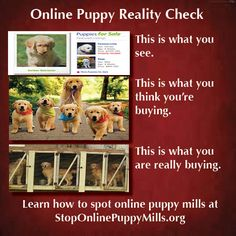 Thinking about buying a puppy online? Please think about that again.